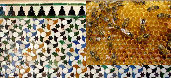 Congruent shapes: tessellated floor, bee honeycomb
