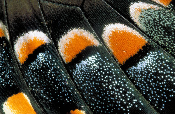 Close up photo of butterfly wings
