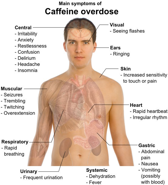Diagram of how caffeine overdose effects the body