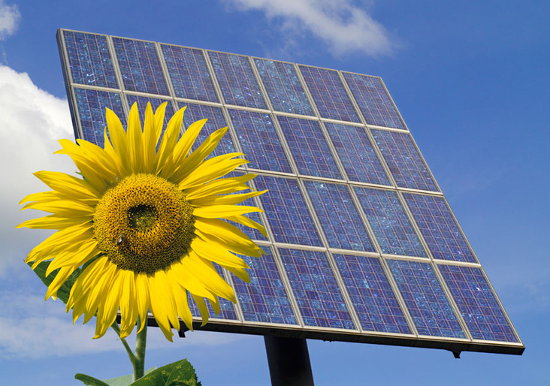 A sunflower in front of a solar panel