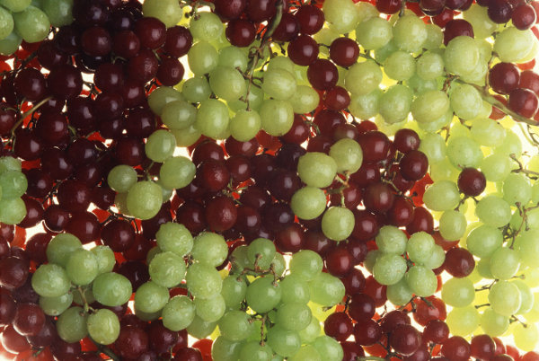 Bunches of red and green grapes