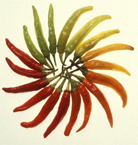 Range of very colourful chillis